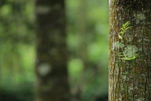 Matelas synthétiques, une menace écologique et sanitaire de grande ampleur 1