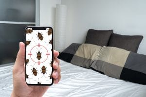 Attention aux signes de punaises de lit